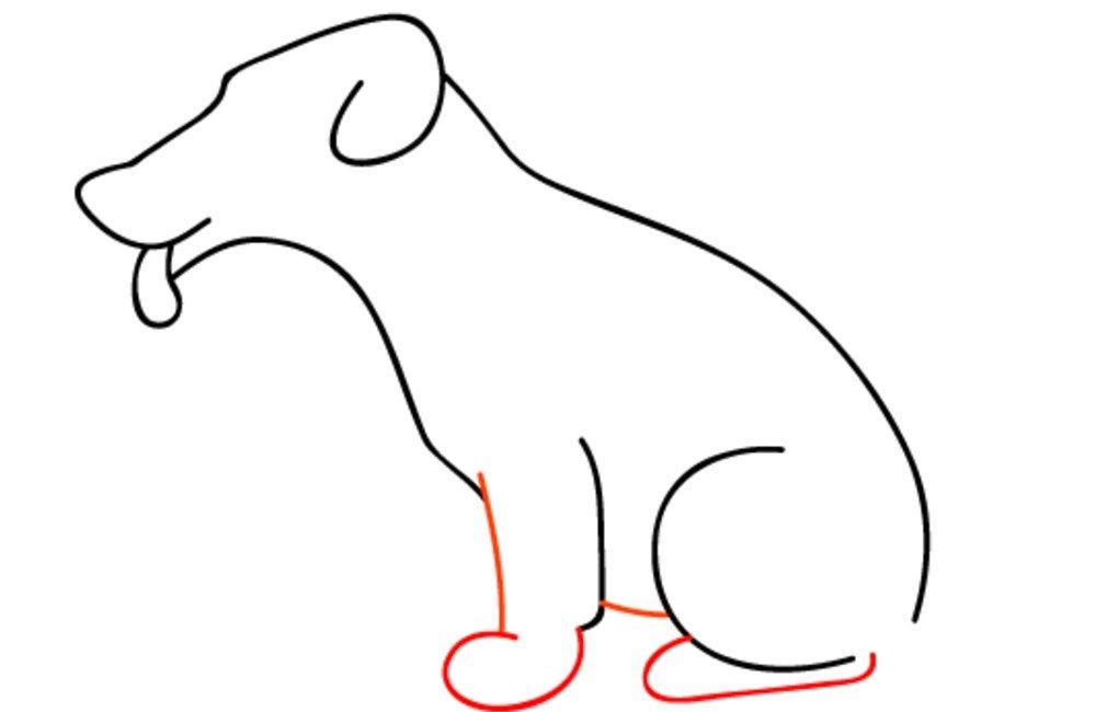 pernas e patas do cachorro